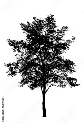 tree silhouette isolated on white background. - 195079651
