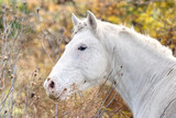 Cute horse free on a field in Argentina - 195084401