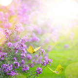 spring flower and butterfly; abstract spring Background; - 195118236