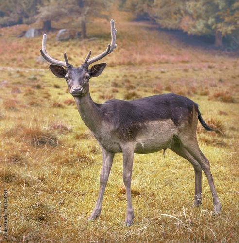 Aluminium Hert The deer