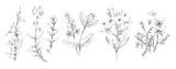 Handsketched Flower and Plant Illustrations - Pencil Graphite Sketches of Flowers and Plants - 195123870