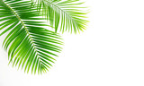 GReen leaves palm isolated on white background. - 195125474