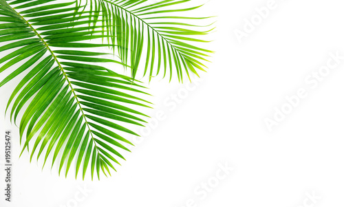GReen leaves palm isolated on white background. © Suraphol