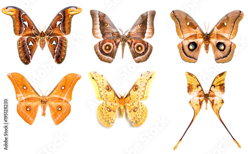 Aluminium Fyle Set of tropical saturniidae night moths