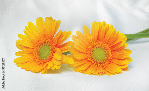 Fotobehang Gerbera yellow flower