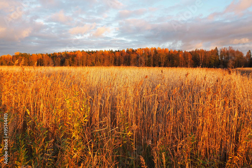 Foto op Canvas Bedehuis Cloudy sky at sunset over autumn yellow field. The scene is Illuminated by sunlight the clouds.