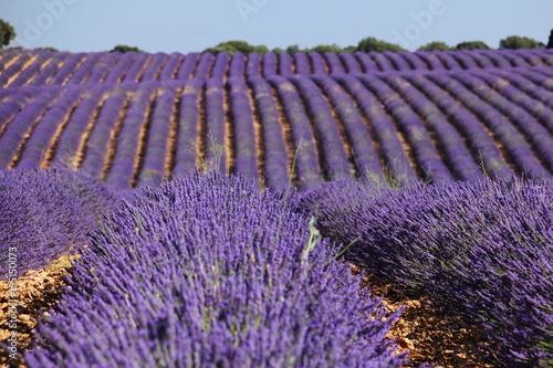 Aluminium Lavendel Campos de lavanda