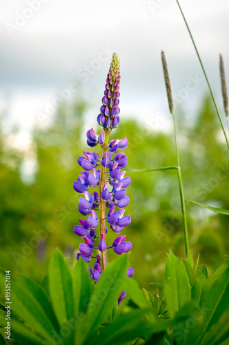 Fotobehang Lavendel flower, lavender, purple, nature, plant, flowers, field, garden, spring, green, summer, blossom, bloom, flora, blue, floral, beauty, herb, wild, violet, color, macro, blooming, herbal, pink