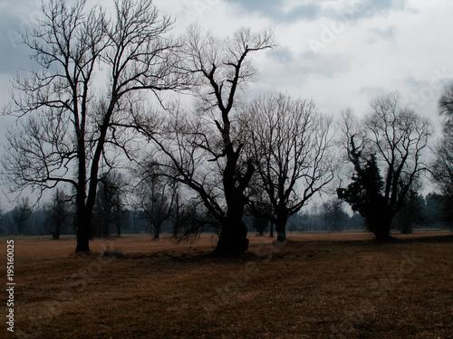 Foto op Canvas Chocoladebruin Solitäre Bäume im März