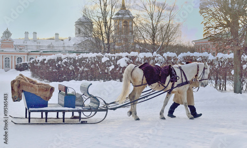 A horse drawn for riding tourists in Kuskovo Manor, Moscow, Russia