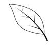 Leaf silhouette vector illustration