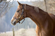 Portrait eines Pferdes am Waldrand