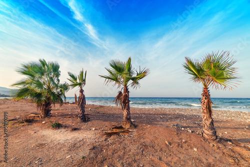 Fotobehang Strand palm trees on the beach
