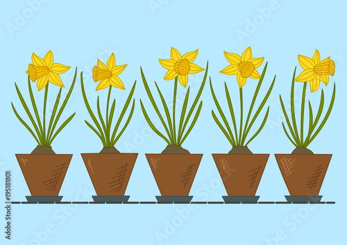 Daffodils in flower pots. Spring flowers. Vector illustration.