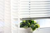 Vase on the window. Plant. Window. Jalousie.