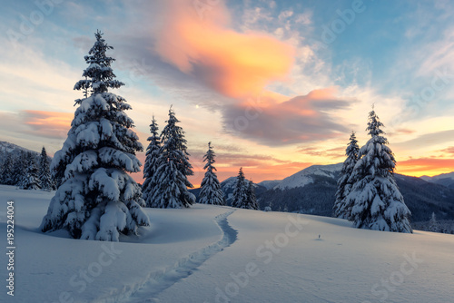 Fotobehang Winter Fantastic orange winter landscape in snowy mountains glowing by sunlight. Dramatic wintry scene with snowy trees. Christmas holiday concept. Carpathians mountain