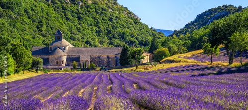 Blooming lavender field in Senanque abbey, Provence, France - 195231625