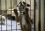 Dog in kennel - 195235437