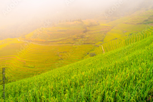 Deurstickers Rijstvelden Green rice terrace fields of southeastern Asia