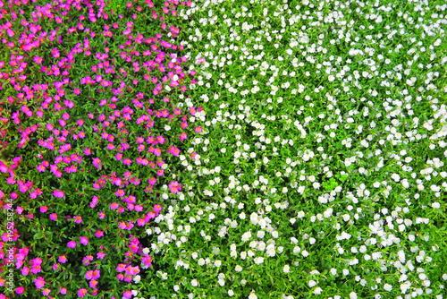 Deurstickers Groene 公園の花々の風景36
