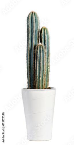 Foto op Canvas Cactus Dark Green Cactus Plant on White Pot