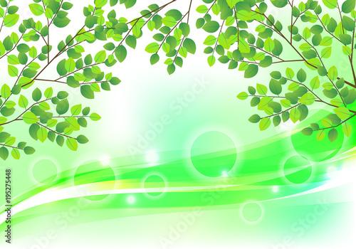 Fotobehang Lime groen 背景 葉