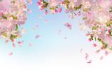 Spring Cherry Blossom - 195286864