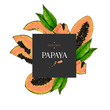 Hand drawn papaya whole, sliced, half with leaves in design template. Colored engraved illustration. Square stylish frame composition. Restaurant menu flyer, banner, poster, exotic fruit summer party