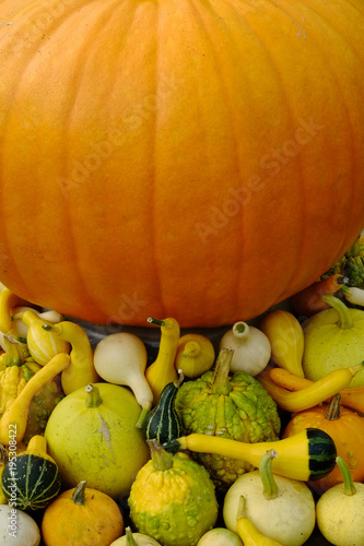 Pumpkin and decorative gourds drying in the sun