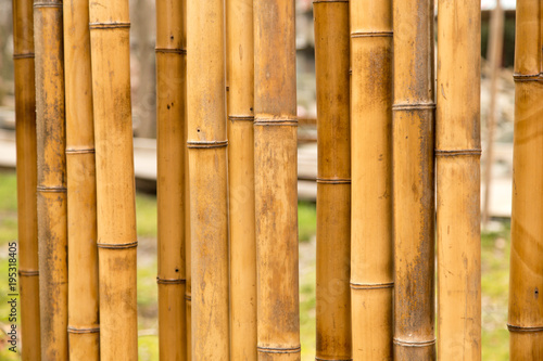 Fototapeta A fence made of bamboo as a background