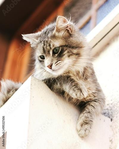 Fotobehang Kat Beautiful cat