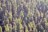 Pine Tree View - 195328249