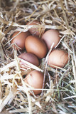 fresh eggs on straw in chicken coop. - 195336475