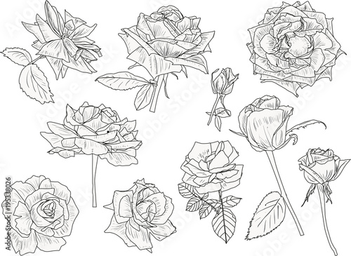 isolated ten roses black outlines collection