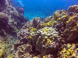 coral reef - 195354033