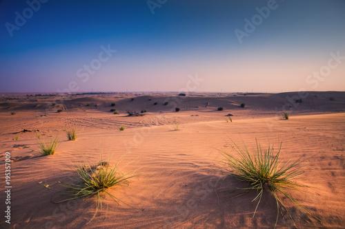 Fotobehang Zalm Arabic desert
