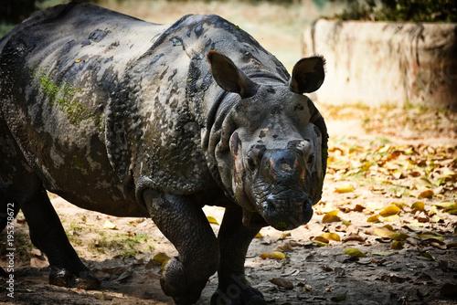 Plexiglas Neushoorn One Horned Rhino