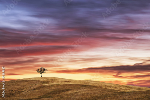 Fotobehang Lavendel lonely tree above the hill at sunset