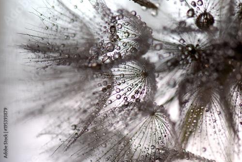 Canvas Paardenbloemen TARAXACUM. DIENTE DE LEÓN