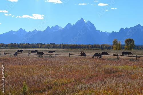 Tuinposter Diepbruine Yellowstone