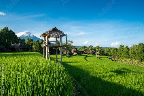 Aluminium Bali Rizière de Munduk - Bali
