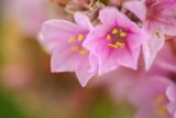 Fleurs rose - 195399281