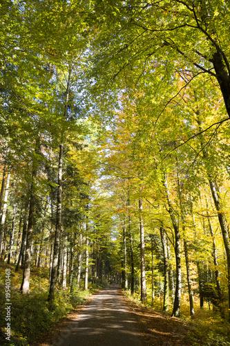 Tuinposter Weg in bos Forêt en automne