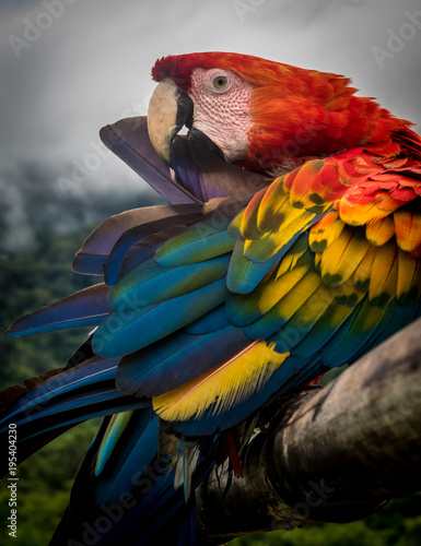 Fotobehang Papegaai Amazon Jungle Parrot