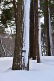 吹雪の後の森 - 195425256