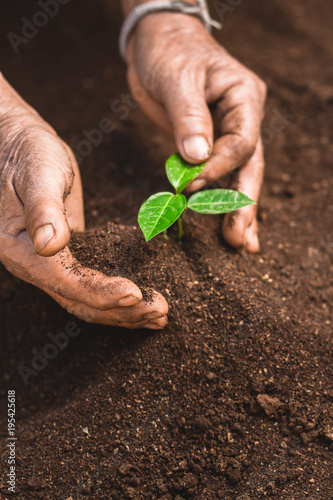 Fototapeta Young sprout in springtime,Closeup.Hands of farmer growing plant a tree natural background,Plant a tree growing plant The soil and