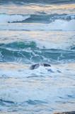 Closeup of ocean waves in blue sea - 195429428