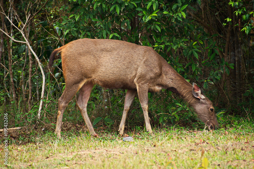 Aluminium Hert Forest Deer