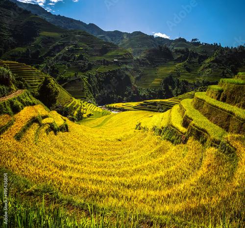 Fotobehang Rijstvelden Rice field and rice terrace in Mu cang chai