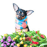 Funny Puppy In A Scarf In Colors   Theme Of Spring Summer Greeting Card Wall Sticker